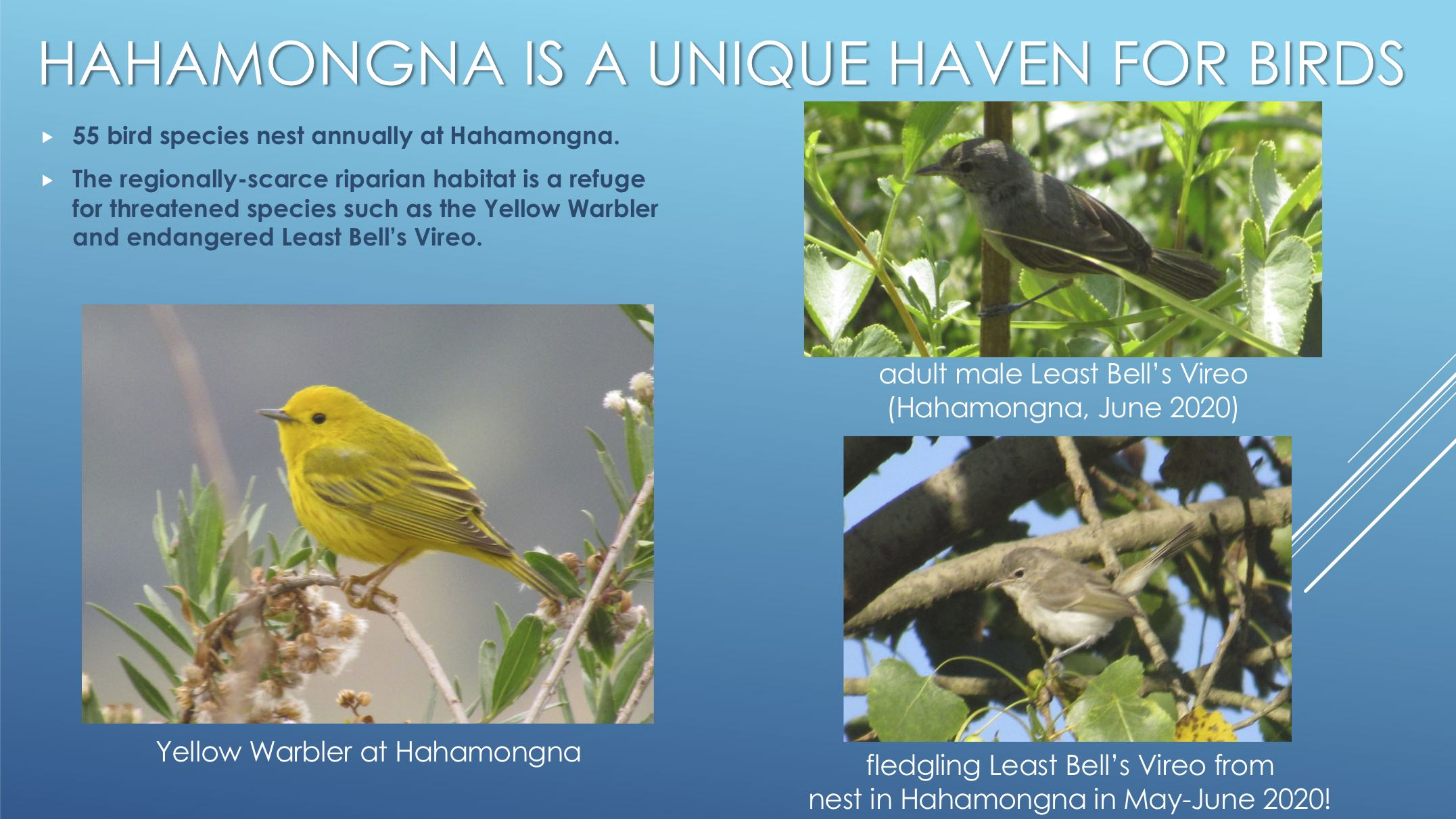 hahamonga is a unique haven for birds